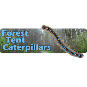 Forest Tent